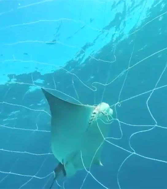 HSI Sharks